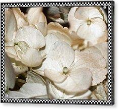 Hydrangea Blossom Framed Acrylic Print