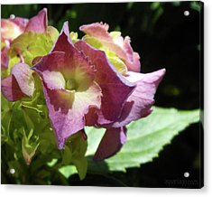 Hydrangea Flowers Fit For A Fairy Acrylic Print