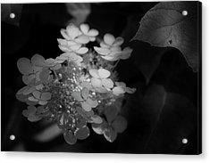 Hydrangea In Black And White Acrylic Print by Chrystal Mimbs