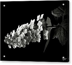 Hydrangea In Black And White Acrylic Print by Endre Balogh