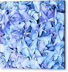 Acrylic Print featuring the photograph Hydrangea by Kristin Elmquist