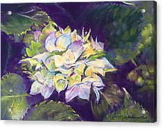 Acrylic Print featuring the pastel Hydrangea by Rebecca Matthews