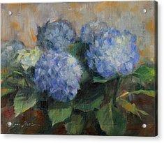 Hydrangea Study Acrylic Print by Anna Rose Bain