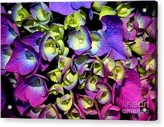 Acrylic Print featuring the photograph Hydrangea by Vivian Krug Cotton