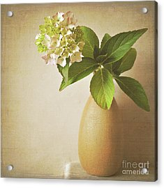 Hydrangea With Leaves Acrylic Print