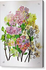 Hydrangea's Changing Colours Acrylic Print