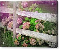 Hydrangeas Acrylic Print by JAMART Photography