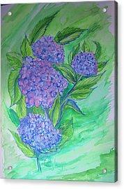 Hydrangea Acrylic Print by Cathy Long