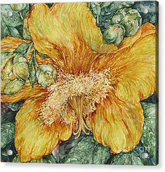 Hypericum Plant Acrylic Print