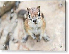 Hypno Squirrel Acrylic Print