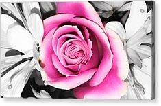 Hypnotic Pink 2 Acrylic Print
