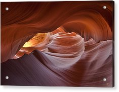 Hypnotized  Acrylic Print by Peter Coskun