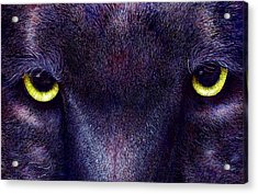 Hyptnotist The Black Panther Acrylic Print by JoLyn Holladay