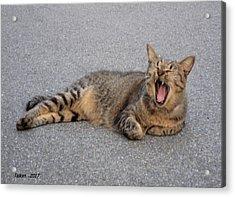 I Am A Cat  13  By Taikan Acrylic Print