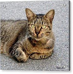 I Am A Cat  2  By Taikan Acrylic Print