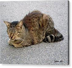 I Am A Cat  4  By Taikan Acrylic Print