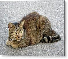 I Am A Cat  5  By Taikan Acrylic Print