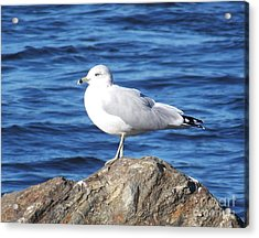 Acrylic Print featuring the photograph I Am A Rock Star - Photograph by Jackie Mueller-Jones