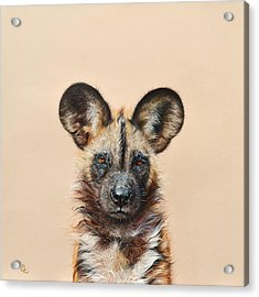 Acrylic Print featuring the drawing I Am A Wild Thing - African Painted Dog by Elena Kolotusha