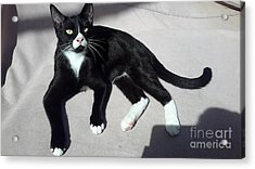 I Am Ceasar. Photo Of Black White Kitten Acrylic Print