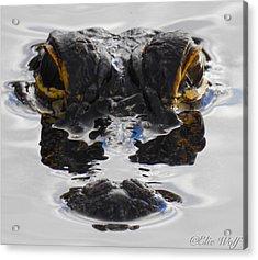 I Am Gator Acrylic Print