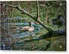 Acrylic Print featuring the photograph I Am Pritty #h9 by Leif Sohlman