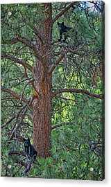 I Am The King Of The Castle Acrylic Print by Paul W Sharpe Aka Wizard of Wonders