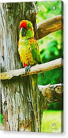 I Blend Right In Acrylic Print