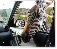 I Brake For Wildlife Acrylic Print