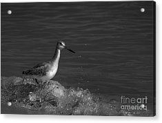 I Can Make It - Bw Acrylic Print