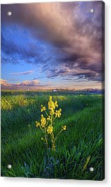 I Can See You When I Close My Eyes Acrylic Print by Phil Koch