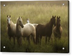 I Dreamed Of Horses Acrylic Print by Ron  McGinnis