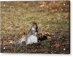 Acrylic Print featuring the photograph I Found Something To Eat... by Vadim Levin