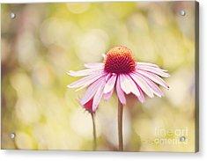I Got Sunshine Acrylic Print by Beve Brown-Clark Photography