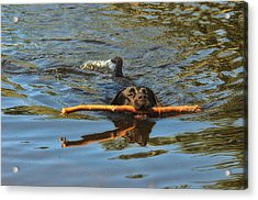 I Got This Acrylic Print by Susan Capuano