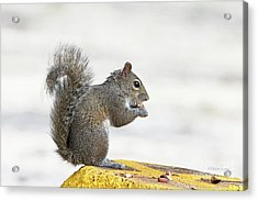 Acrylic Print featuring the photograph I Have My Nuts by Deborah Benoit