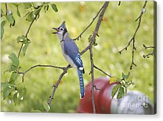 I Have Something To Say Acrylic Print