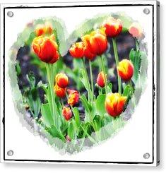 I Heart Tulips Acrylic Print by Bill Cannon
