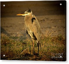 I Know They Are Coming Wildlife Art By Kaylyn Franks Acrylic Print