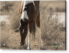 I Know You There Acrylic Print by Nicole Markmann Nelson