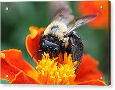 I Like Pollen  Acrylic Print by Jason Hochman