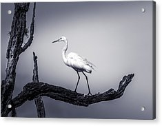 I Live Here Acrylic Print by Marvin Spates