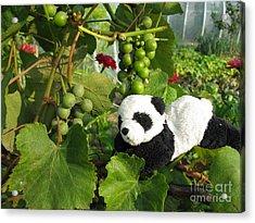 Acrylic Print featuring the photograph I Love Grapes Says The Panda by Ausra Huntington nee Paulauskaite