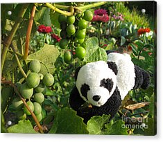 Acrylic Print featuring the photograph I Love Grapes B by Ausra Huntington nee Paulauskaite