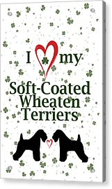 I Love My Soft Coated Wheaten Terriers Acrylic Print