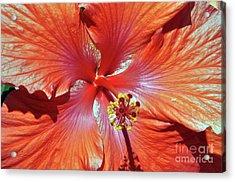 I Love Orange Flowers 2 Acrylic Print