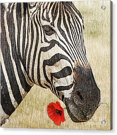 I Love Red Acrylic Print by Barbara Dudzinska