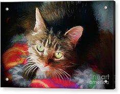 I Love This This Kitty 2017 Acrylic Print