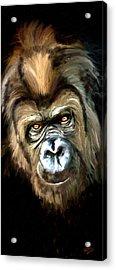 Gorilla Portrait Acrylic Print by James Shepherd