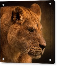 I Promise - Lion Art Acrylic Print